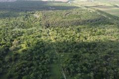 Sabal Palm Forest