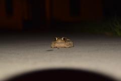 frog floor