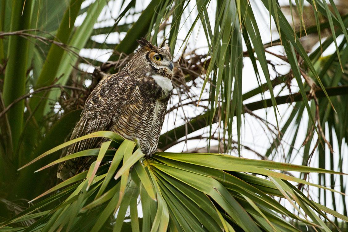 Endangered animals at Sabal Palm Sanctuary