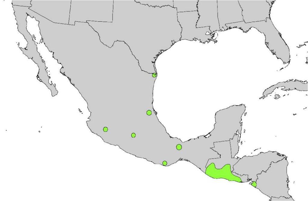Current distribution of Sabal Palms