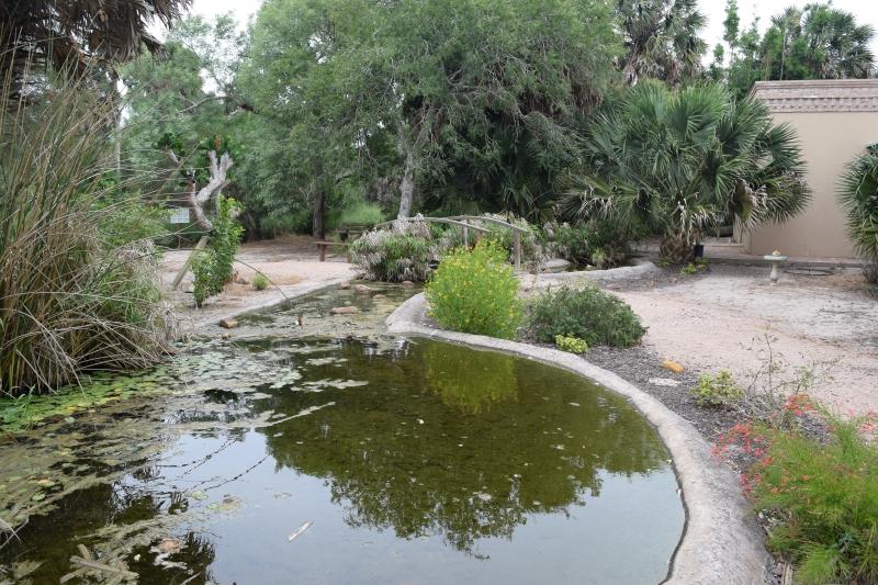 Pond in the Sabal Palm Sanctuary garden
